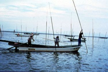 Men farming seaweed