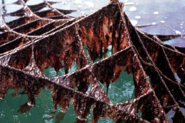 What Is Nori And What Are Seaweed Health Benefits