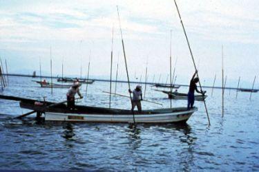 Men farming seaweed