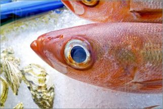 Look for fish eyes that are clear and bright and bulging