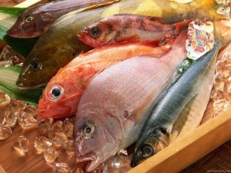 Various fish on ice